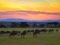 Lauren Heerschap - Sunrise on the Mara